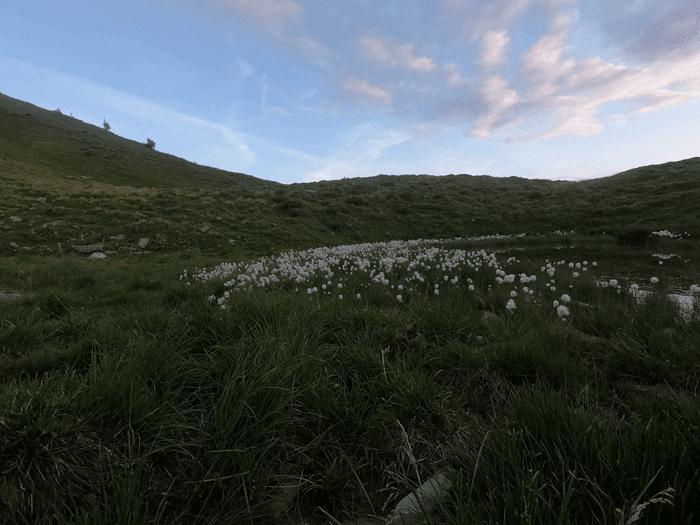 lumenwiese am Stätzerhorn - Foto: laufSinn
